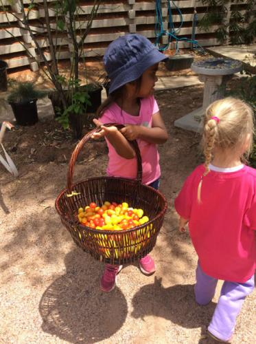 Flinder's-Children's-Centre-collecting-produce